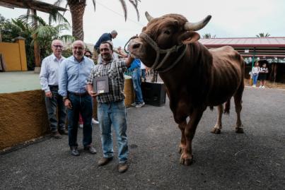 El toro 'Rubio' y la vaca 'Marinera' conquistan al jurado del Concurso de Ganado Selecto
