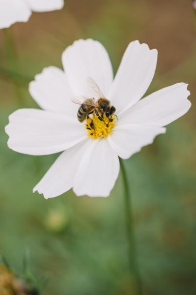 El Festival MUMES apuesta por la miel como valor cultural de los pueblos
