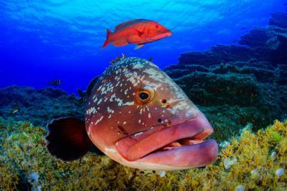 Sacha Lobenstein, Mejor Fotógrafo Submarino en el 4º Open Fotosub Online isla de El Hierro