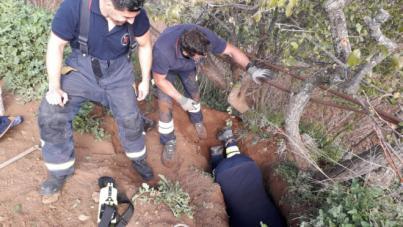 Rescate de dos cachorros en el interior de una cueva en El Rosario