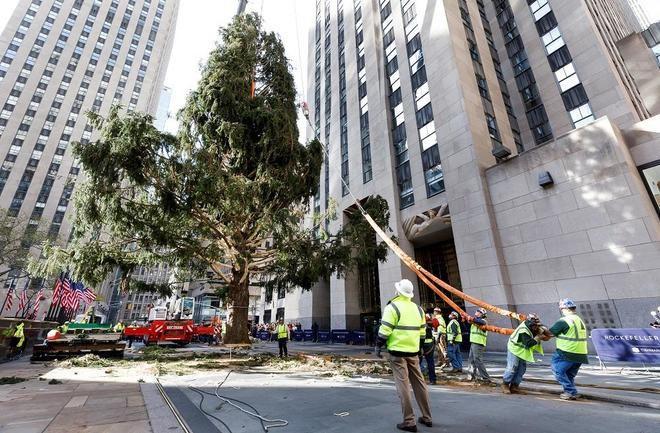 Navidad en Nueva York: Rockefeller Center ya tiene su tradicional abeto