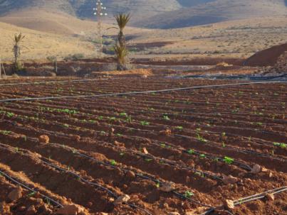 El Gobierno de Canarias convoca subvenciones para la eficiencia del riego