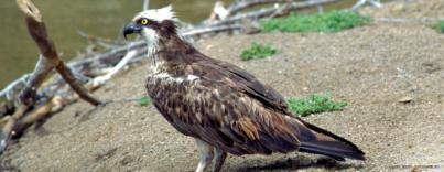 La Gomera forma a 40 guías turísticos para el avistamiento de aves