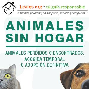 Canariasdiario.com se adhiere a la Red Canaria de Animales sin hogar
