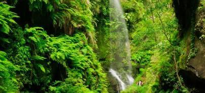 La Palma elabora planes de autoprotección para las áreas recreativas
