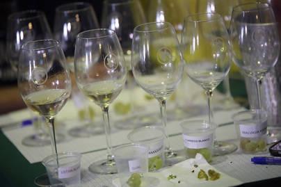 Más de 50 profesionales participan en la Master Class de Cata de Uvas y Vinos canarios