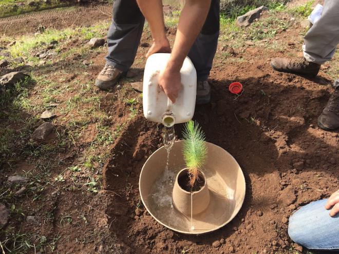 El 90 % del suelo de Gran Canaria tiene riesgo muy alto de desertificación