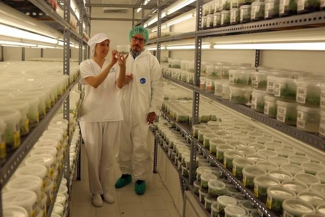 Cultesa aplica la innovación al sector agrario