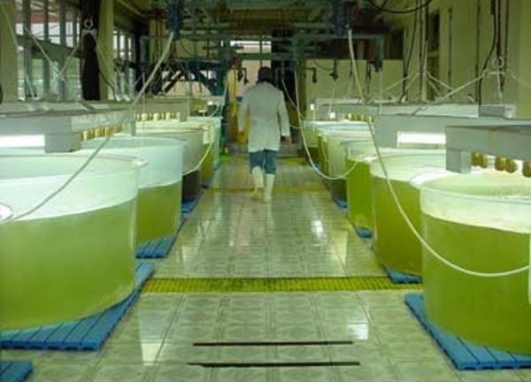 10 millones y 17 hectáreas de terreno para cultivar algas