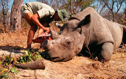 Un millón de especies amenazadas de extinción por la acción del hombre