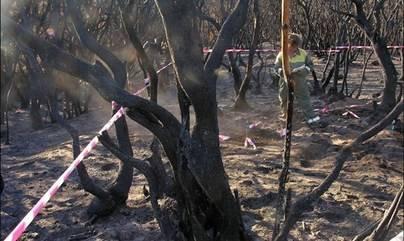 Canarias declara alerta máxima por riesgo de incendios forestales
