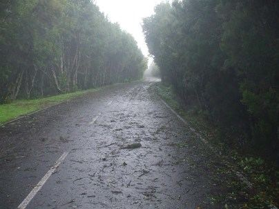 El Gobierno de Canarias declara la situación de alerta por vientos