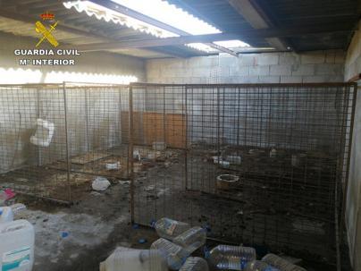 Detienen a una persona por maltratar animales en Gran Canaria