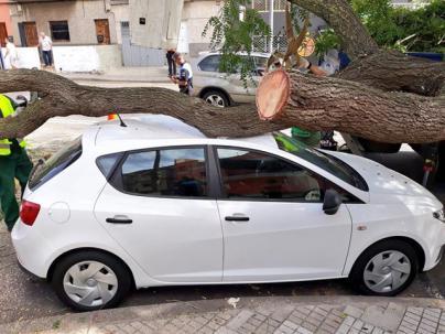 La caída de una rama de grandes dimensiones en La Laguna causa daños en dos vehículos