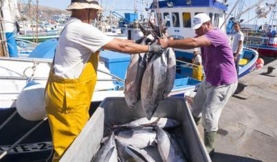 El Gobierno abona 5,1 millones de ayudas para la pesca y acuicultura