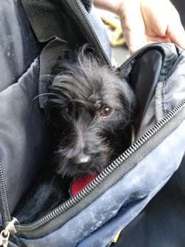 Encuentran un perro dentro de una mochila en un contenedor de basura de LPGC