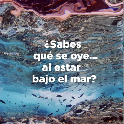 Islas Canarias celebra el Día de los Océanos con un homenaje al sonido del Atlántico