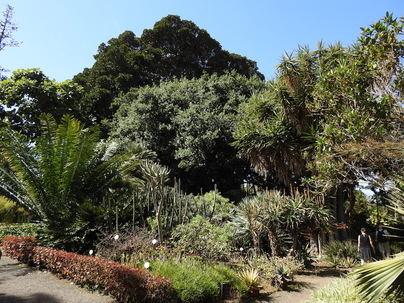 La Consejería de Agricultura, Ganadería y Pesca destinará 300.000 euros al Jardín Botánico de Tenerife
