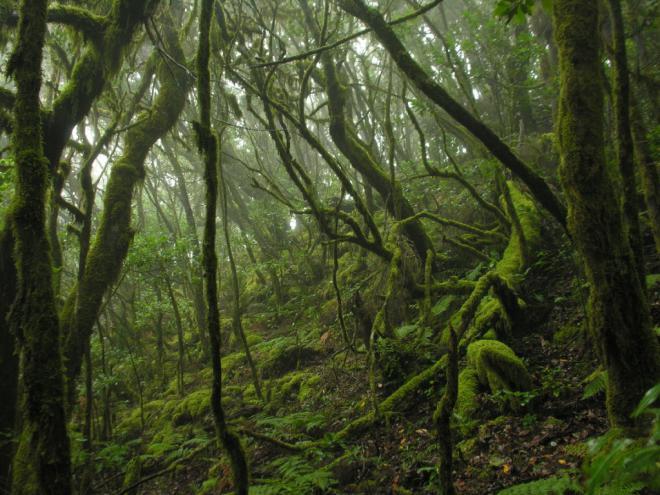 Transición Ecológica saca a consulta pública la Ley de Biodiversidad y de Recursos Naturales de Canarias