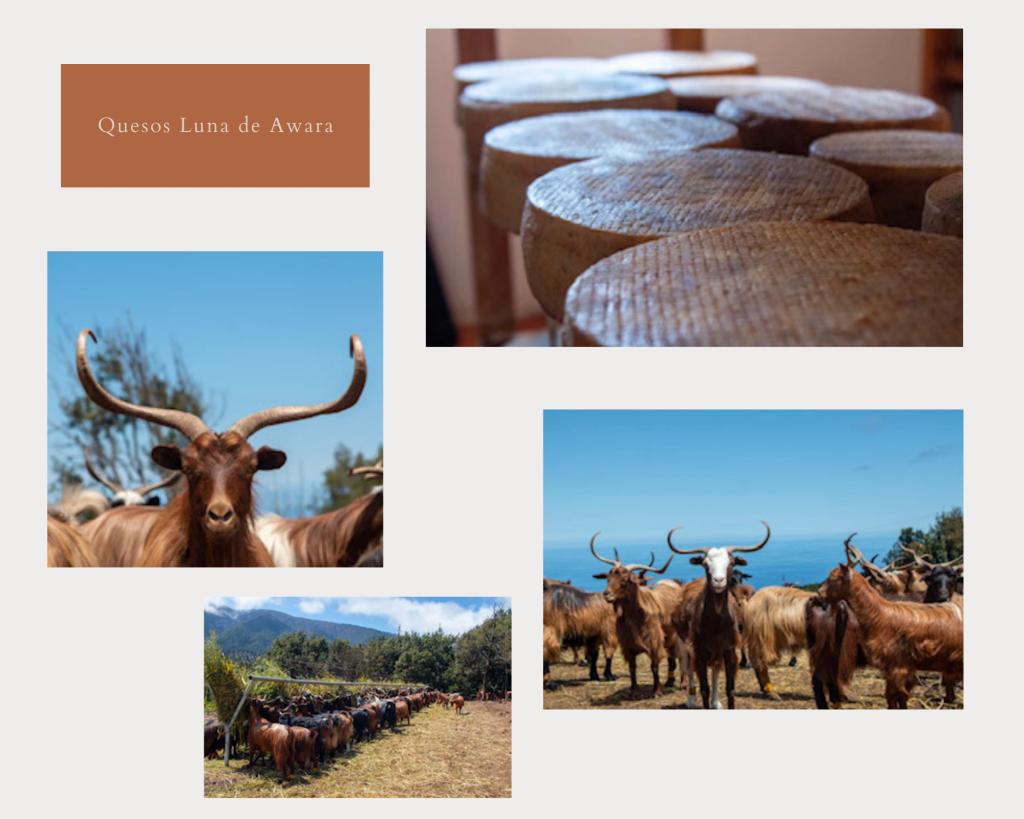 Tres quesos de leche de Cabra Palmera, premiados en Agrocanarias 2021