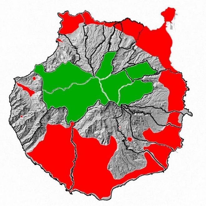 La diocalandra avanza por los palmerales de Gran Canaria pero todavía puede ser controlada