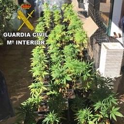 Detenido en Lanzarote por cultivar plantas de marihuana en su casa