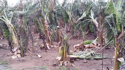 El Cabildo de El Hierro analiza el estado de los daños provocados el viento
