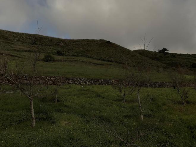 Canarias es la reserva genética de olmos para todo el país