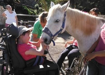 Canarias implementará el uso de caballos en las terapias a menores y personas con discapacidad