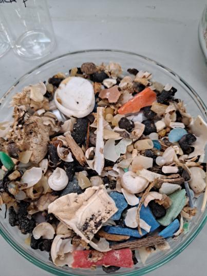 Miembros del i-UNAT-ULPGC analizan la concentración de productos farmacéuticos adsorbido por los microplásticos