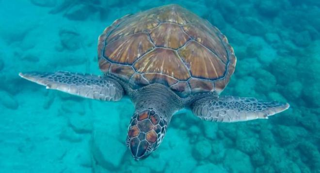 El Senado insta al Gobierno a garantizar la protección de tortugas y cetáceos en aguas Canarias