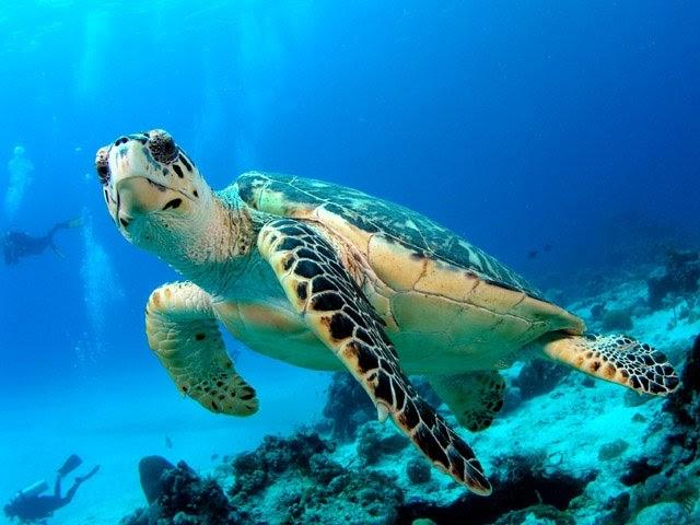 Canarias plantea a la ministra la firma de un acuerdo para la gestión y seguimiento de la biodiversidad marina
