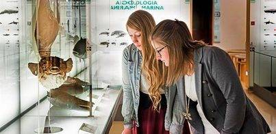 Los museos de Tenerife cierran 2014 con más de 335.000 visitantes