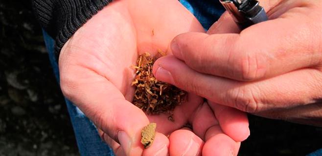El cannabis es más peligroso cuando se inicia antes de los 16