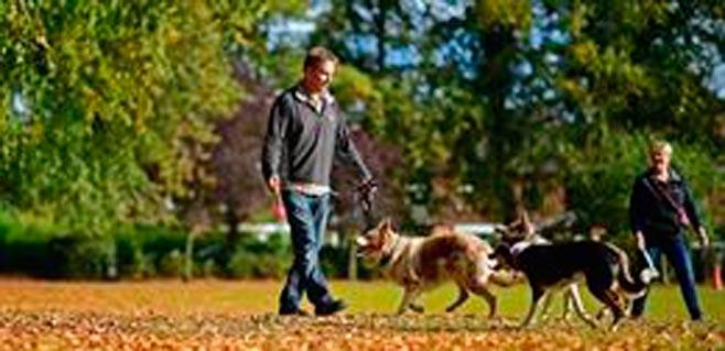 El 32% de dueños de mascotas decide destino si admiten animales domésticos