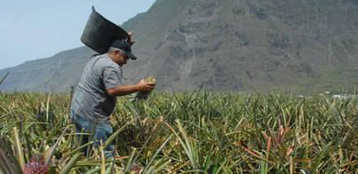 GMR y El Hierro promocionan conjuntamente los productos de la isla