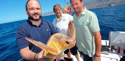 Devuelven al mar una tortuga boba en la costa de Adeje