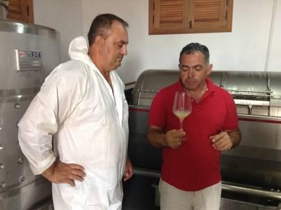 Se vendimia la primera uva blanca de la historia de Fuerteventura con DO