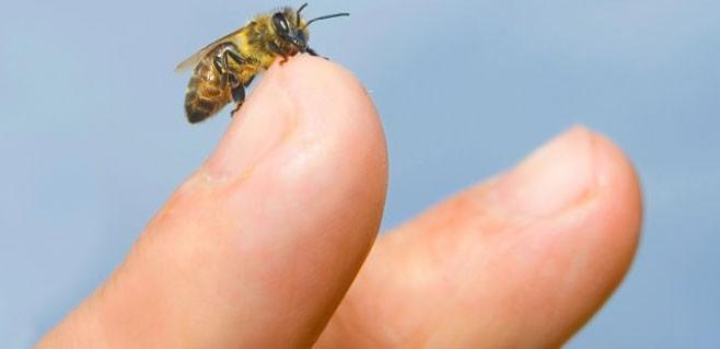 La alergia a avispas y abejas afecta a un 3% de la población ...